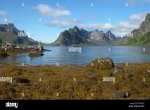 Lofoten Islands Stock &