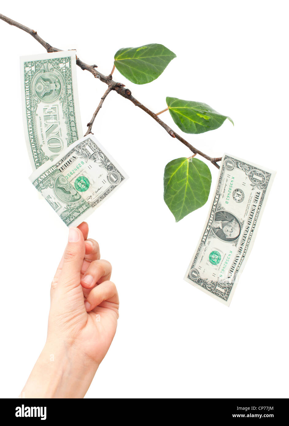 Dollar Tree Protractor