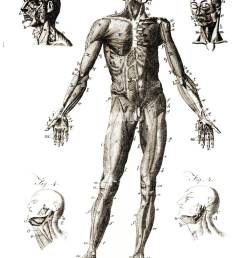 diagram showing labeled human anatomy published by unknown engraver in encyclopedia britannica 1771  [ 962 x 1390 Pixel ]