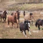 Herd Of Horses Running Wild At Proud Spirit Sanctuary Stock Photo Alamy