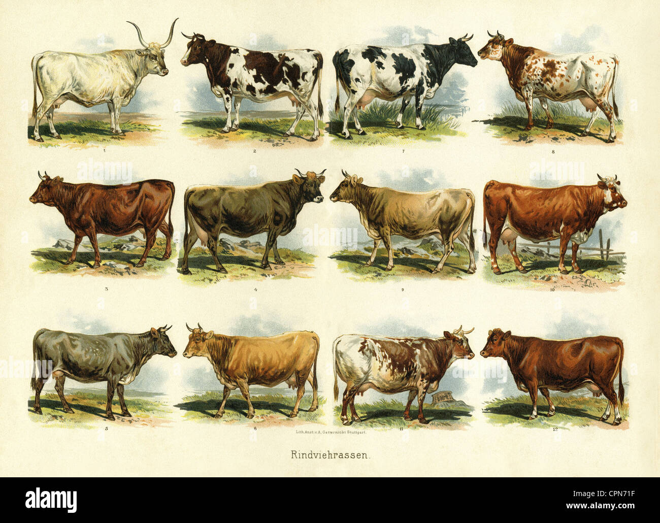 Agriculture Livestock Farming Illustrated Chart Cattle