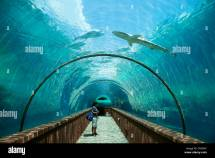 Atlantis Aquarium Paradise Island Bahamas