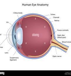 cross section of human eye stock image [ 1300 x 1208 Pixel ]