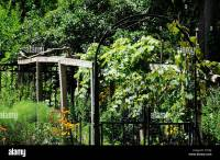 Home grown grape vines and trellis in hillside backyard ...