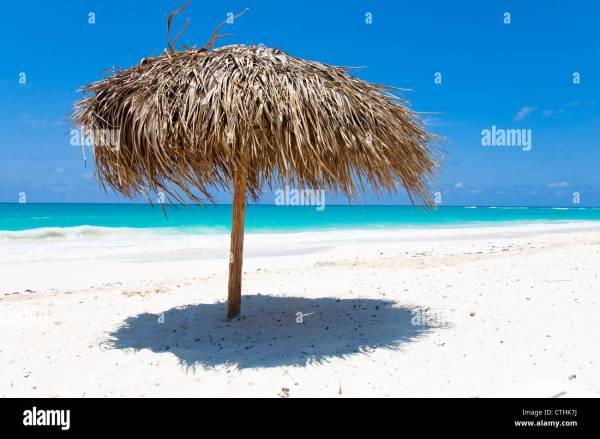 Palm Tree Beach Umbrella Cayo Largo Del Sur Cuba Stock