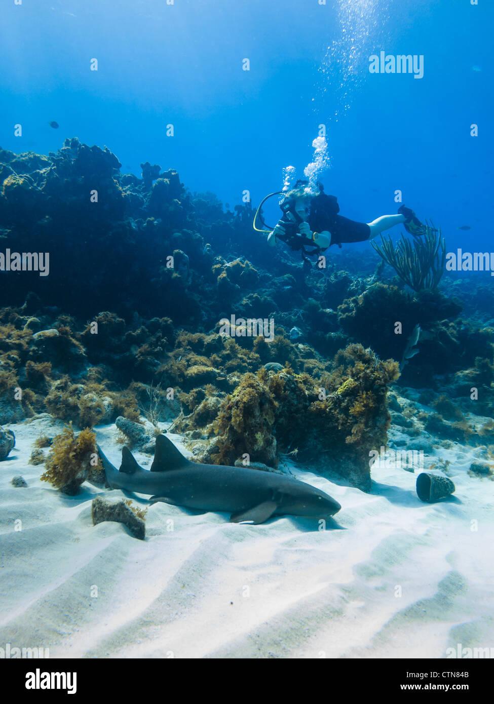 scuba diver photographs a