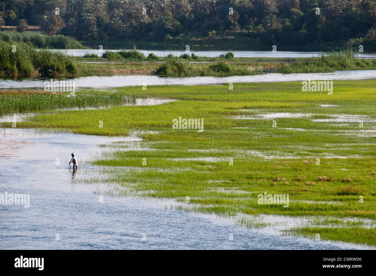 Upper Egypt Marshes Nile River And Valley Countryside Between Luxor Stock Photo