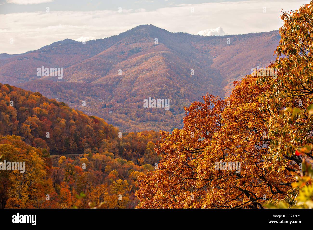 colorful autumn foliage as