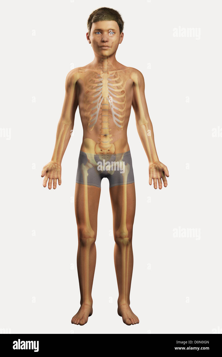Rib Cage Bones Visible : bones, visible, Illustration, Resolution, Stock, Photography, Images, Alamy