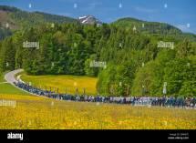 Germany National Flower Stock &