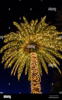 Palm Tree Covered In Fairy Lights Christmas