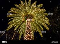 Palm Tree Christmas Lights Stock Photos & Palm Tree ...