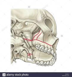 illustration skull stock image [ 1294 x 1390 Pixel ]
