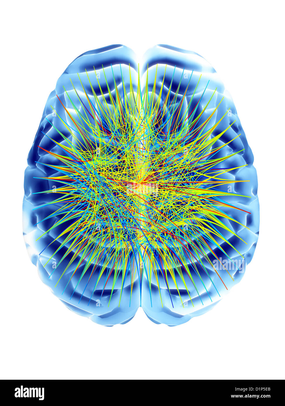 Brain And Circular Network Diagram Stock Photo Royalty Free Image