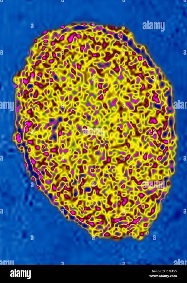 Pluripotent Stem Cells Stock &