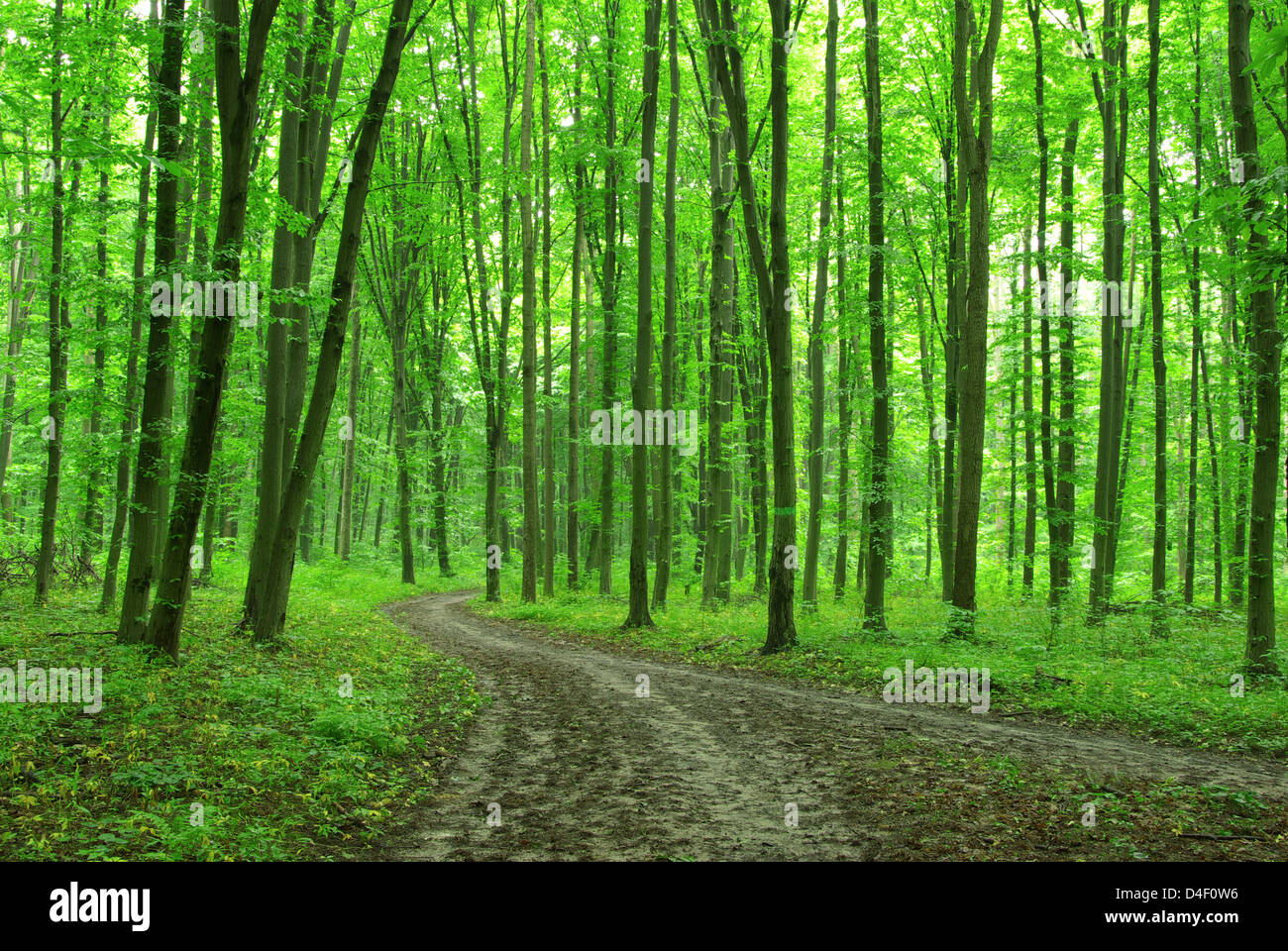 Bolefloor offers floorboards, cut using custom algorithms, that follow the natural warp and weft of trees. Forest Trees Nature Green Wood Backgrounds Stock Photo Alamy