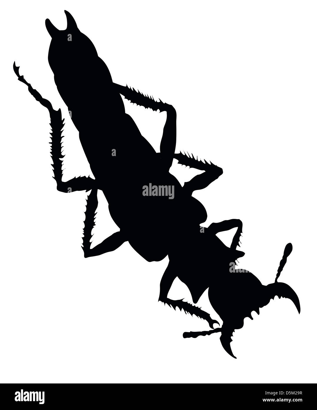 Grasshopper And Ant Stock Photos Amp Grasshopper And Ant