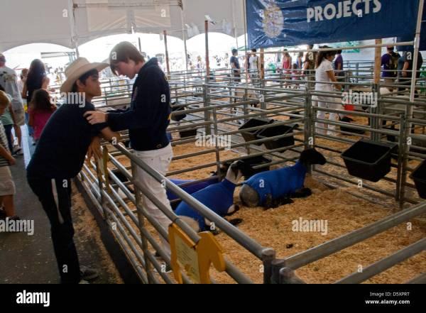 Livestock Auction Orange County Fair Costa Mesa