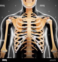upper body bones artwork [ 1300 x 1390 Pixel ]