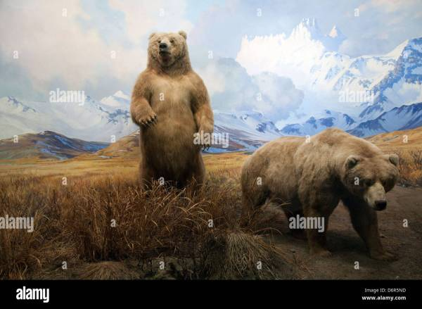 Natural History Museum Diorama Stock & - Alamy