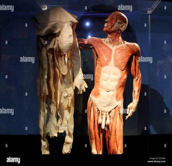 World Human Body Exhibit Holding Skin