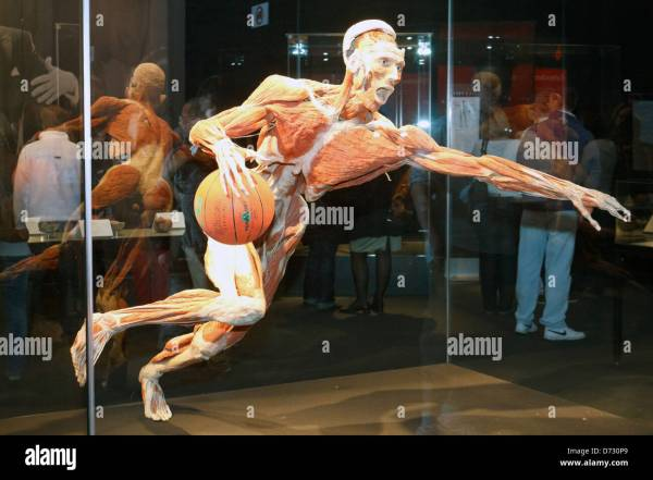 Berlin Germany Plastination Basketball Player