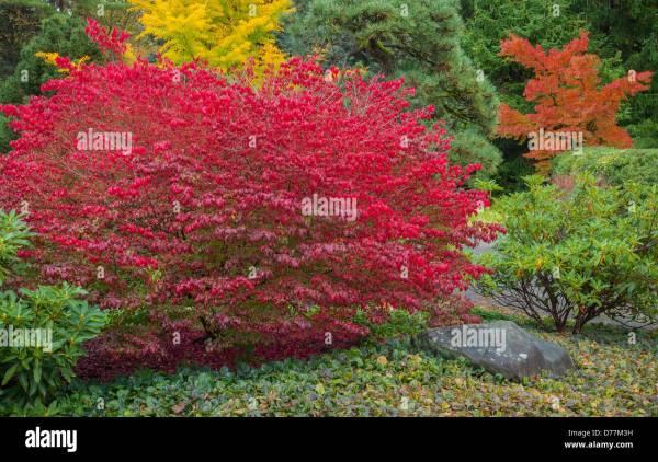 burning bush kaufen # 50