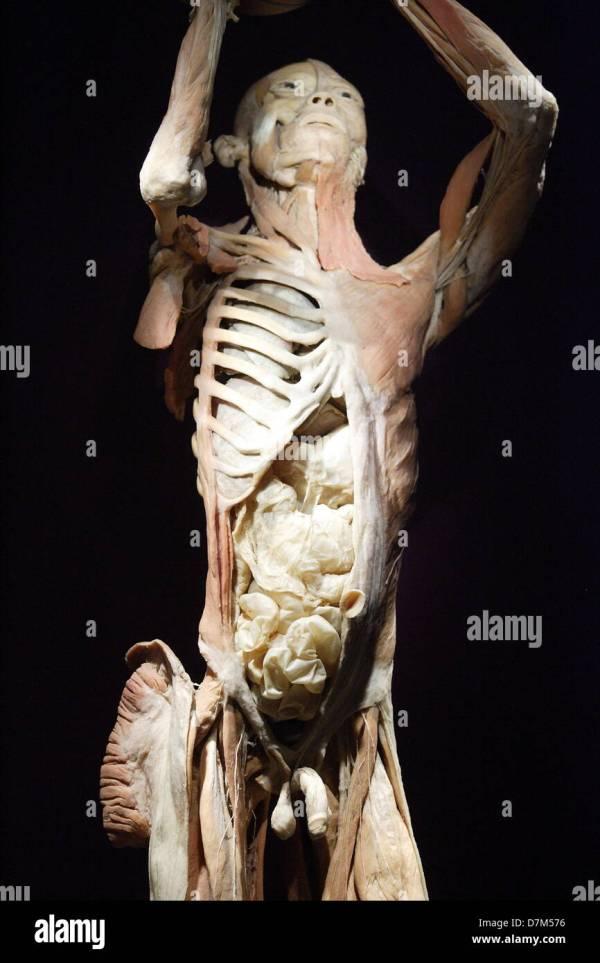 Real Human Bodies Stock & - Alamy