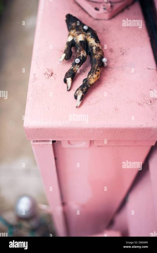 small resolution of a chicken claw with some beads atop a pink fusebox outside a house in new orleans la