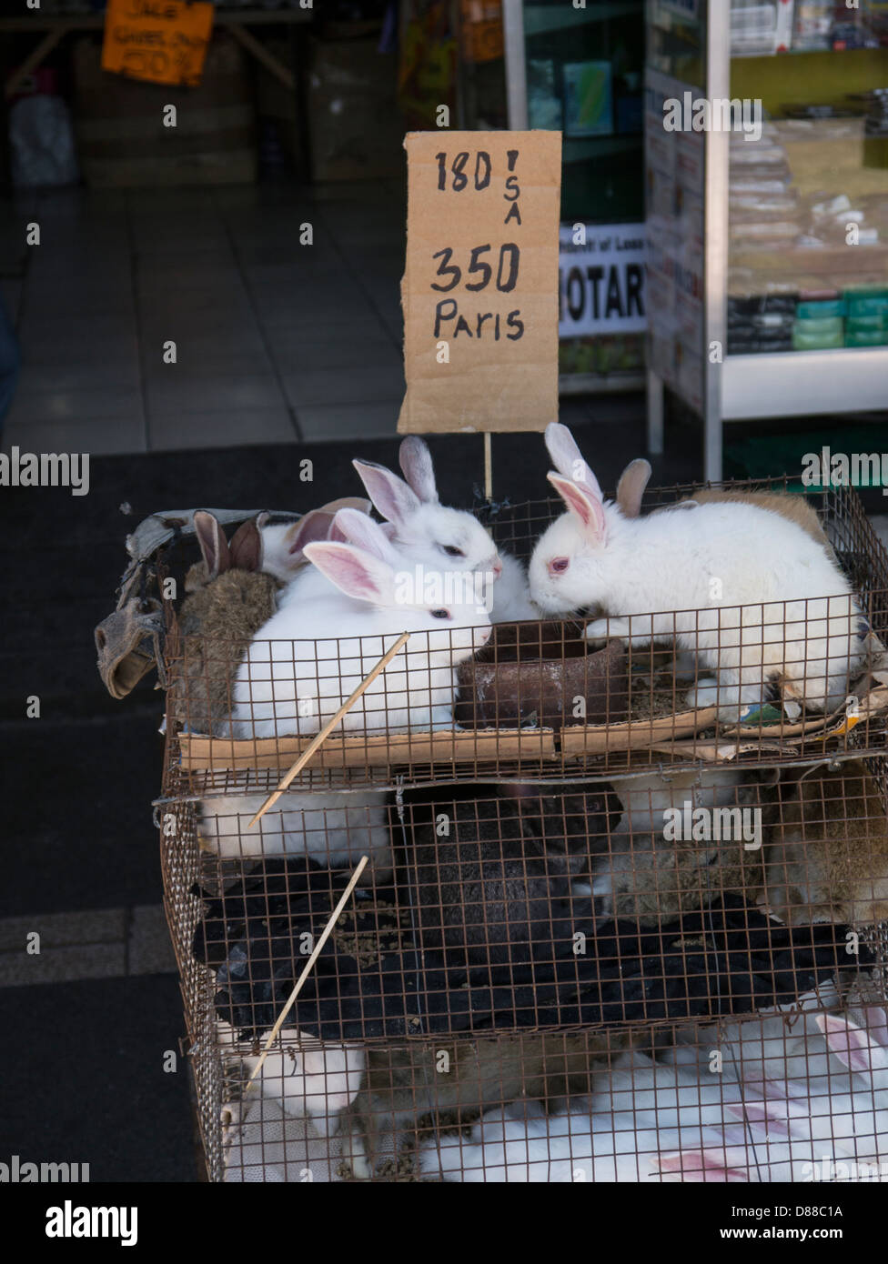 Pictures Of Rabbits For Sale : pictures, rabbits, Rabbit, Resolution, Stock, Photography, Images, Alamy