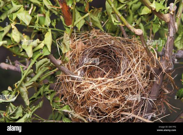 Detail Of Beautiful Natural Empty Birds Nest In Tree
