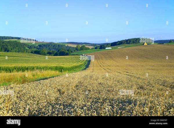 corn fields in hilly landscape