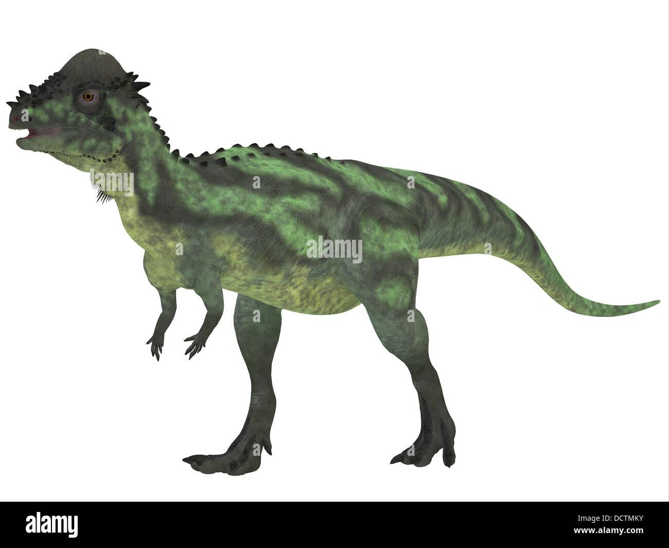 Pachycephalosaurus Stock Photos Amp Pachycephalosaurus Stock