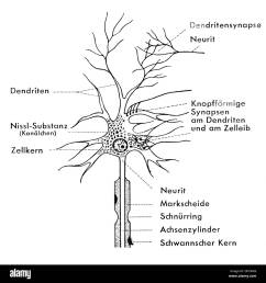 medicine anatomy nerve cell schematic diagram of a ganglion cell drawing 20th century 20th century graphic graphics neural neuritic nerve pathway  [ 1300 x 1381 Pixel ]