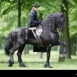 Friesian Horse Black Stallion Woman Rider Sidesaddle Trotting Park Stock Photo Alamy