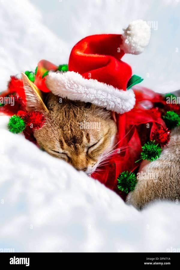 Cats Wearing Santa Hats Christmas