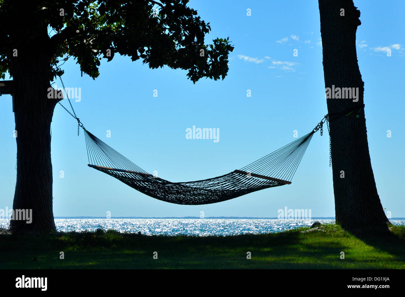 hammock suspended between trees
