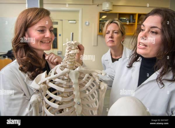 Forensic Anthropology Bone Identification