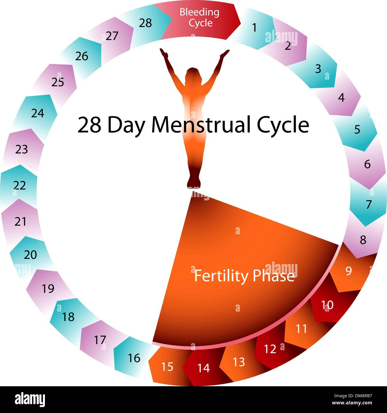 hight resolution of menstrual cycle fertility chart