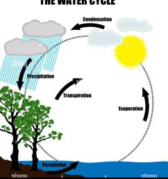 schematic representation of the water cycle in nature stock image [ 1155 x 1390 Pixel ]