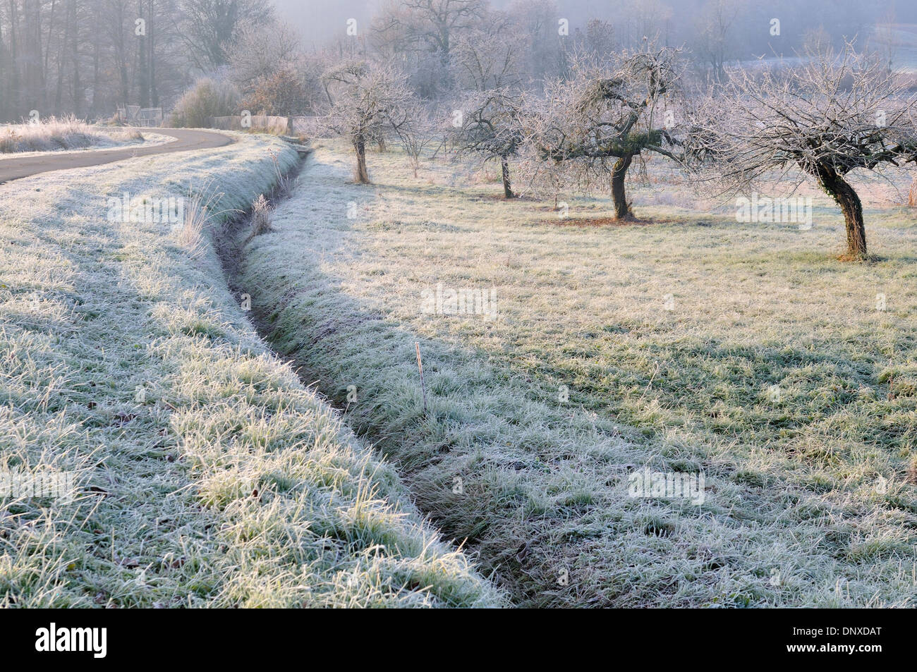 Image result for frost orchard