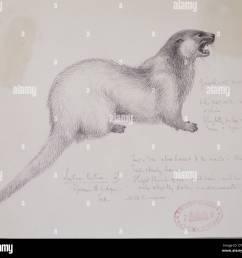 lutra lutra european otter [ 1300 x 1188 Pixel ]