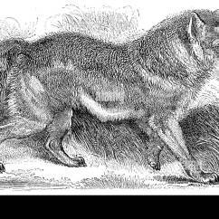 Plot Diagram For The Maze Runner Wiring Drag Car Coyote Drawing Stock Photos And Images