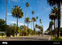 Palm Lined Streets Beverly Hills Los Angeles California