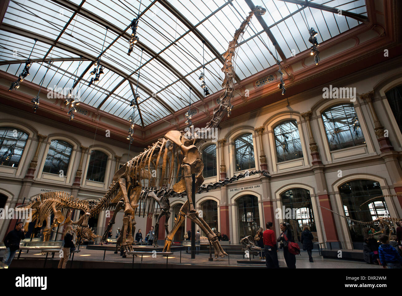 Museum fuer Naturkunde Berlin Museum of Natural History Stock Photo 68119344  Alamy