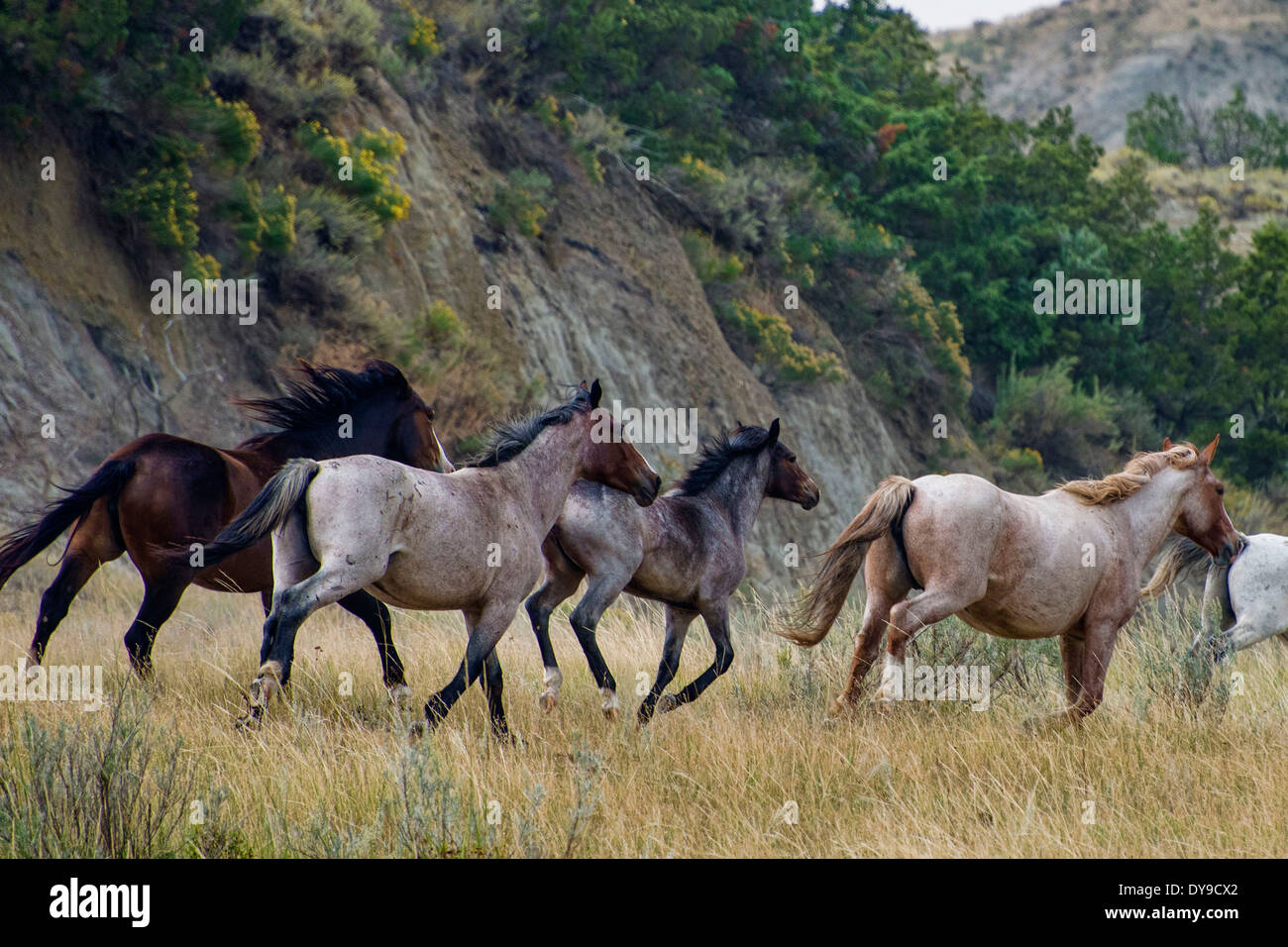 Wild Horses Theodore Roosevelt National Park North