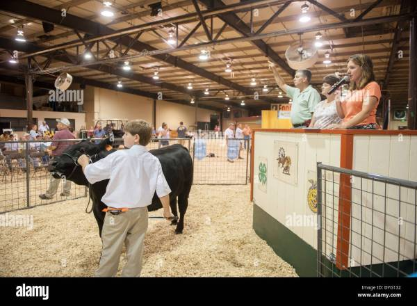 Livestock Auction Maryland State Fair Stock Royalty