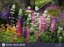 Flowers In Glenveagh Gardens National Park