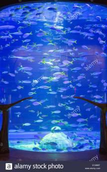 United Arab Emirates Dubai Aquarium In Atlantis Hotel