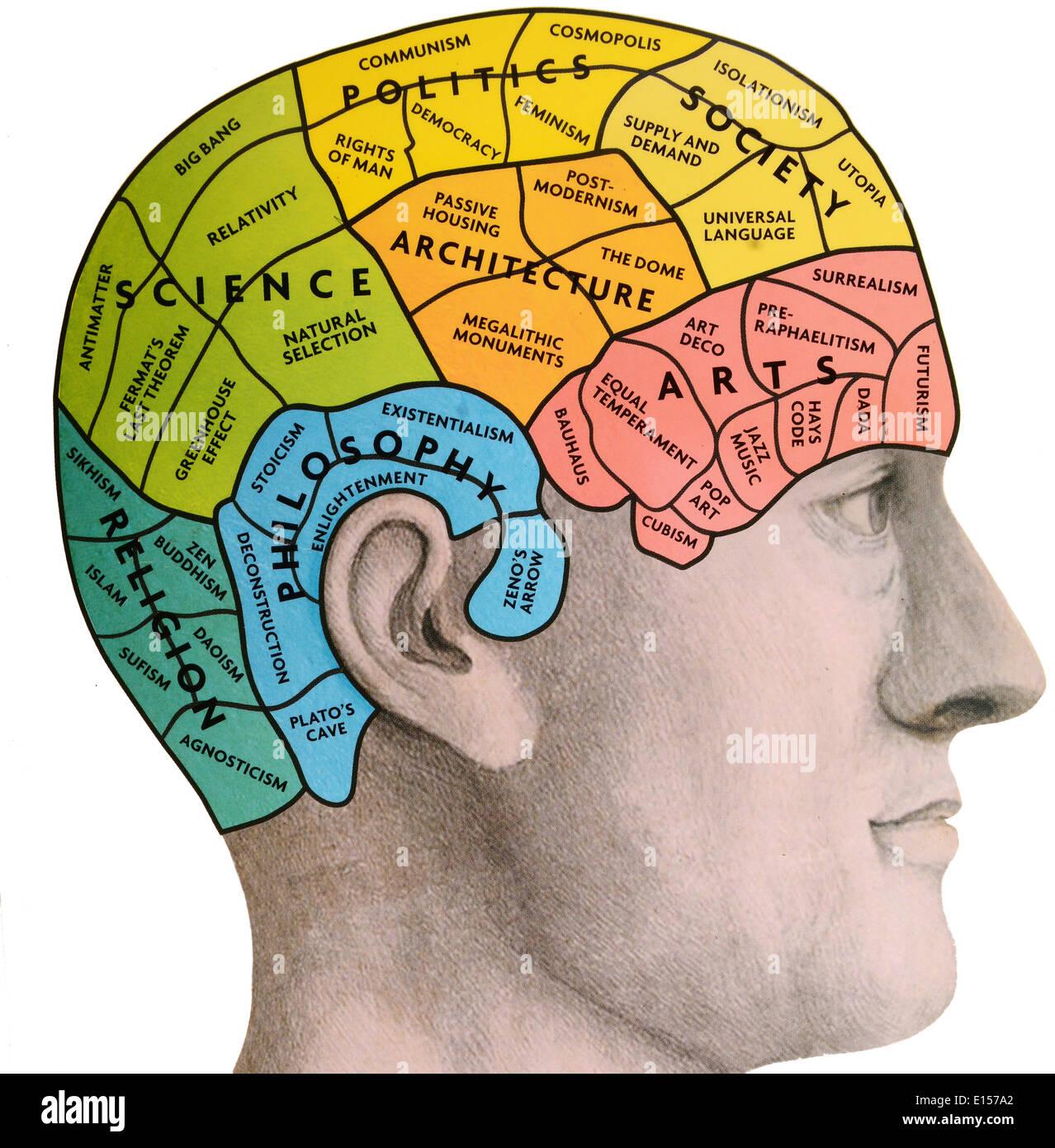 Phrenological Brain Stock Photo